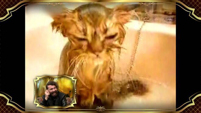 Halil Sezai şarkılarına maruz kalan hüzünlü hayvanlar