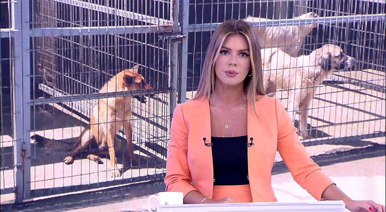 Kanal D Haber - 31.07.2019