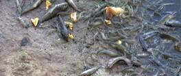 Son Dakika Haberleri: Gölde binlerce balık öldü | Video