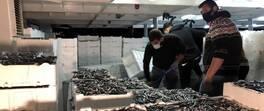 Balıkçılar yüzlerce kasa hamsiyle döndü | Video