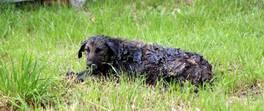 Zifte bulanan köpek 3,5 saatte temizlenip, tedaviye alındı