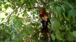 Osman ağaçta asılı kalınca