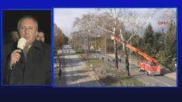 Yalova'da 18 ağaç neden kesildi?
