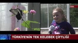 Türkiye'nin tek kelebek çiftliği