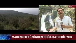 Kaz Dağları'nda yüzlerce ağaç kesildi!