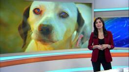 Kanal D Ana Haber Bülteni - 07.02.2016
