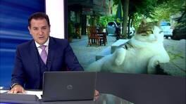 Kanal D Ana Haber Bülteni - 04.10.2016