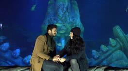Adnan'ın romantik sürprizi!
