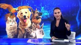 Buket Aydın'la Kanal D Haber - 04.10.2018