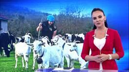 Buket Aydın'la Kanal D Haber - 12.11.2018