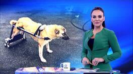 Buket Aydın'la Kanal D Haber - 18.12.2018