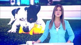 Kanal D Haber Hafta Sonu - 09.06.2019
