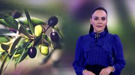 Buket Aydın'la Kanal D Haber - 17.10.2019