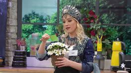 Elif'e çiçek gönderen gizemli kişi kim?
