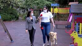 Görme engelli bireylerin can yoldaşı: Rehber Köpekler