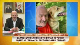 İçişleri Bakanı Süleyman Soylu: Emniyet ve Jandarma da hayvanlara şiddet birimi kurulacak!