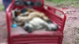 Son Dakika Haberleri: Sakarya'da hayvan katliamı iddiası   Video
