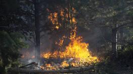 Son dakika... İzmir ve Edirne'de orman yangınları | Video