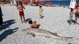 Son Dakika Haberleri: Ölü köpek balığı sahile vurdu | Video