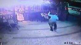 Köpeğiyle gezerken kedinin saldırısına uğradı   Video