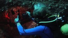 Su altındaki yaşam ölümsüzleşiyor | Video
