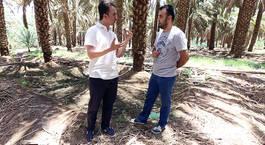 Fatih Savaş Kutsal Topraklarda - Medine hurma bahçesi ve hurmanın önemi